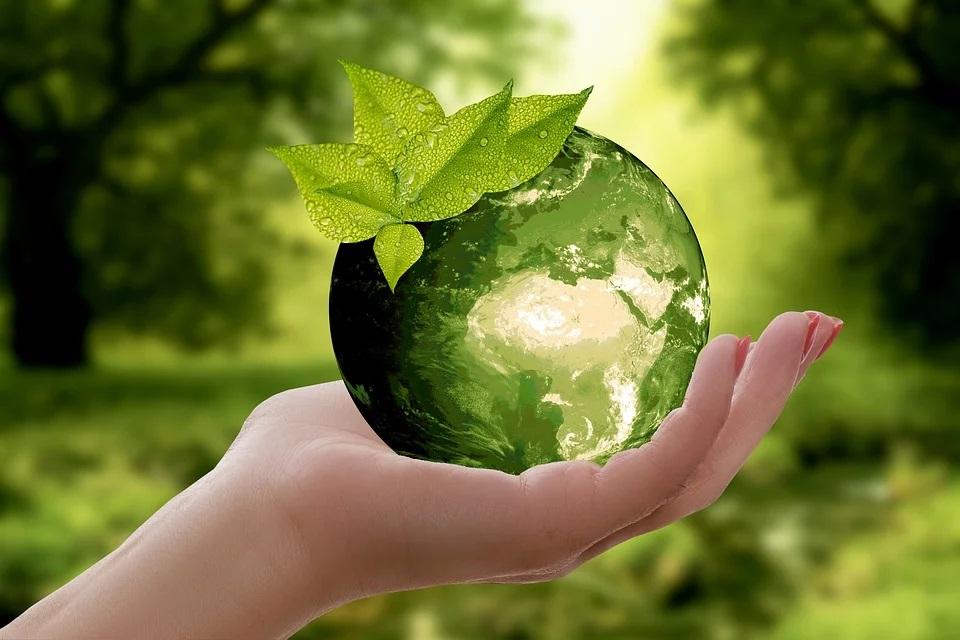 gobelet compostable